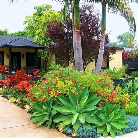 succulent front yard gorgeous simply succulents pinterest