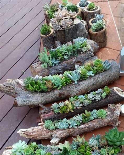 potted succulent garden www pixshark images