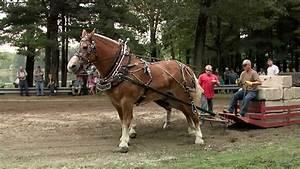 2011 Brethren Horse Pull