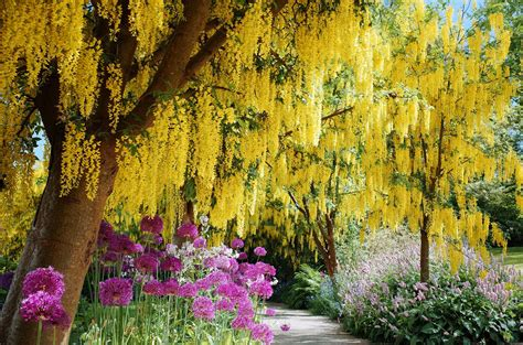flowered tree flowering trees for landscaping inspiration