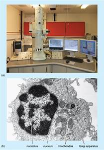 A Tour Of The Cell  Transmission Electron Microscopy