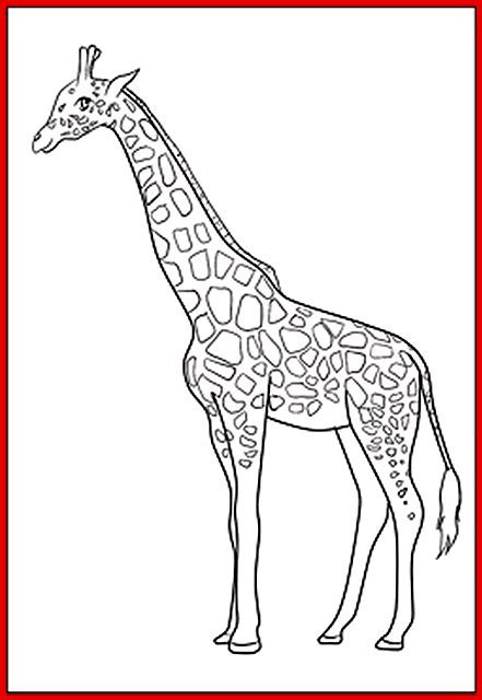 Giraffe Ausmalbild   Rooms Project   Rooms Project