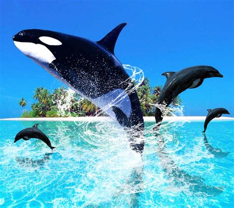 Living 3d Dolphins Animated Wallpaper - free live dolphin screensavers living 3d dolphins