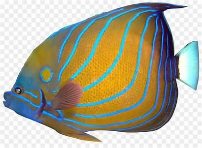 Angelfish Tropical Fish Lionfish Exotic Clip Carassius