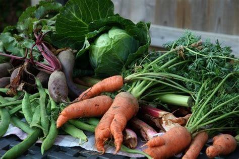 cuisiner topinambour focus sur les fruits et légumes de saison académie du
