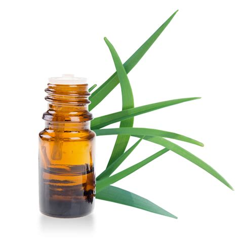 huile essentielle de citronnelle fiche d informations d 233 taill 233 e