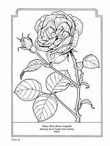 Coloring Flowers Language Pages Rose Flower Dover Sheets Bilder Books Colouring Para Blumen Colorir Drawings Yellow Ausmalbilder Adult Salvo Por sketch template
