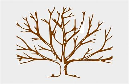 Tree Leaves Clipart Trunk Brown Clip Trees