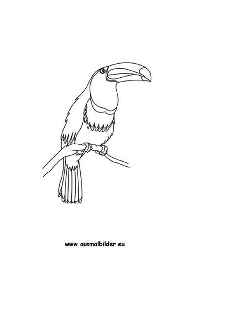 ausmalbild tukan kostenlos ausdrucken