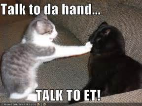 how to talk to a cat cat talk kitty litter and inglorious litigious