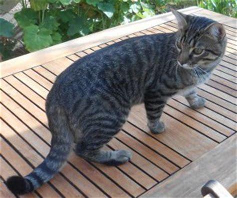 chronische nierenerkrankung bei katzen der tierblog