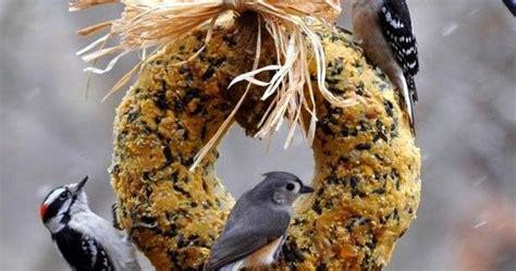 rebecca s bird gardens blog diy suet wreath