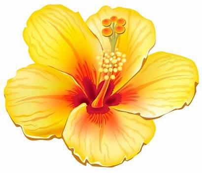 Exotic Flower Clipart Yellow Flowers Yopriceville Previous