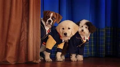 Pup Academy Air Season Date Renewed Expected