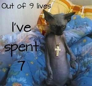 Thug cat - Meme Guy