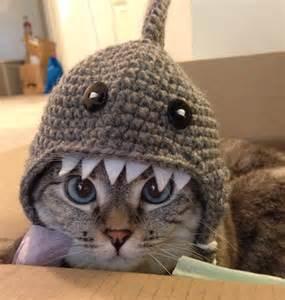 hats for cats feline fashion warehouse nala s handmade crochet shark hat nala cat