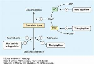 Anticholinergic Asthma Mechanism