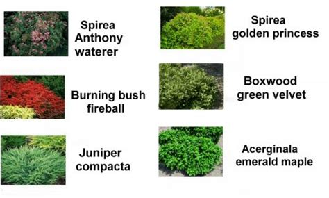 small landscape bushes landscaping bushes shrubs flowers and ground covers
