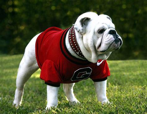 Uga; The Bulldog Mascot Through History