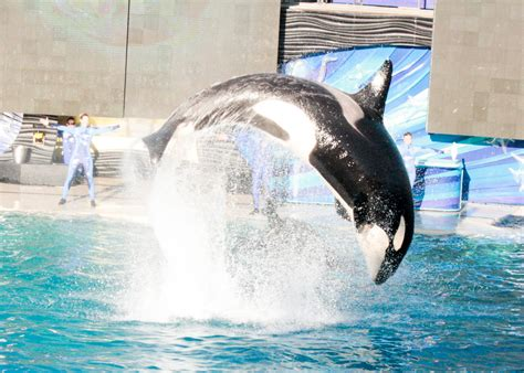 vacation california southern sea disneyland shamu active adding crazy loveourcrazylife becca robins incredible watching credit experience adventure