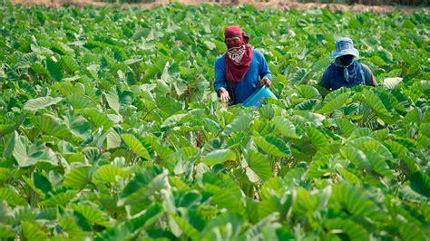 ชี้นโยบายรัฐทำลายวงจรเกษตร สถาบันป๋วยฯ แจงเหตุคนไทยจน-หนี้สินเพิ่ม