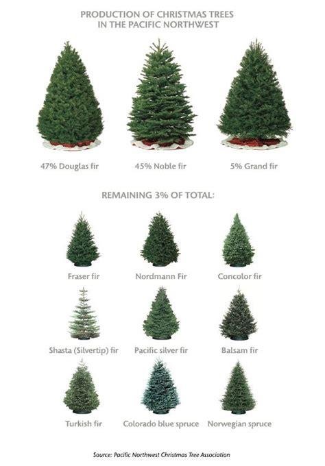 best christmas tree farms in washington state 25 best ideas about douglas fir tree on douglas fir tree balsam