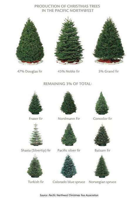 tree species  christmas trees google search