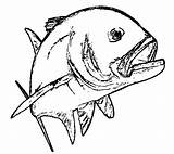 Trout Template Fishing Coloring Pages Sketch Roko Island sketch template