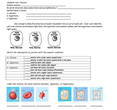 Diffusion And Osmosis Worksheet For Middle School