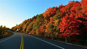 Trees, Landscape, Road, Wallpapers, Hd, Desktop, And, Mobile, Backgrounds