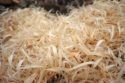 Wood Shavings · Free photo on Pixabay