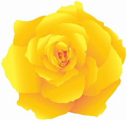 Yellow Rose Clipart Deco Roses Transparent Yopriceville