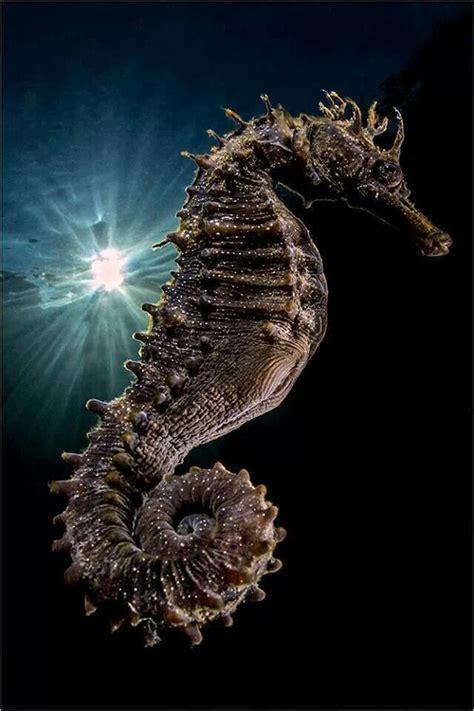 sea under seahorse animals