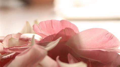 hd hintergrundbilder blumenblaetter blumen rosa zaertlich