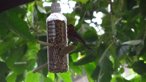 homemade bird feeder  water bottles