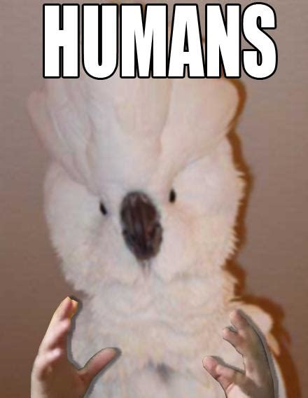 Humans Meme - humans cockatiel birds with arms know your meme