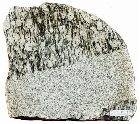 rocks in specimen