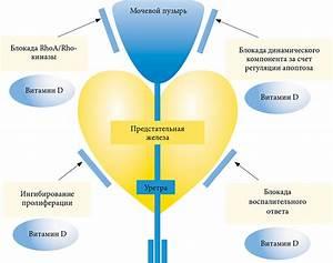 Доброкачественная гиперплазия аденома предстательной железы лечение