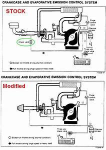 Purge Control Valve  U0026 Evap Emissions