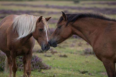 forest ponies wonderful meet visit residents famous most why
