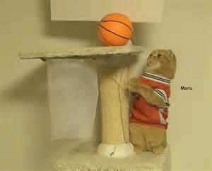 basketball cat kittens basketball best