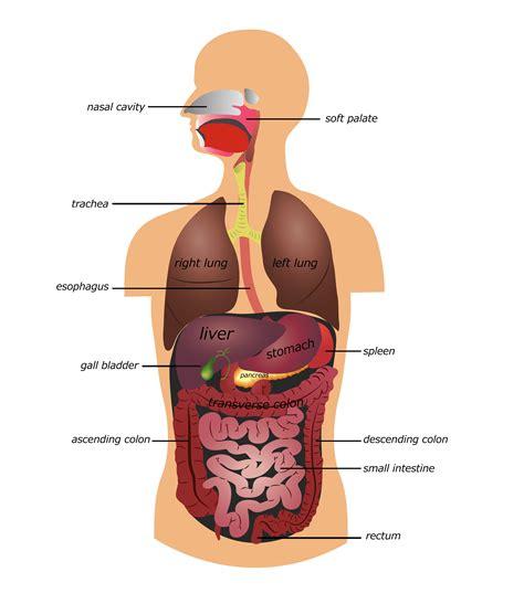Celiac Disease Gicarecom