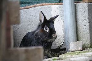 Wie Lang Ist Ein Floh : meine drei l wen und ihr m dchen bilder kaninchen forum by sweetrabbits made ~ Eleganceandgraceweddings.com Haus und Dekorationen