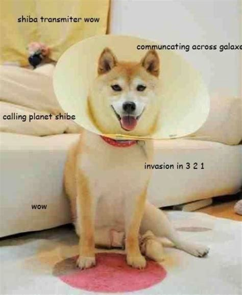 How To Make Doge Meme - doge doge meme and shiba inu on pinterest