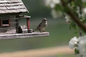 Vogelhaus Für Balkon : vogelhaus f r den balkon sch ne ideen zum selbermachen ~ Whattoseeinmadrid.com Haus und Dekorationen