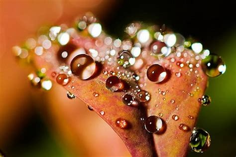 breathtaking photograph  dew drops  pic design swan