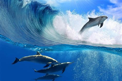 diy frame dolphins jump ocean waves animal landscape scenery poster fabric silk poster print