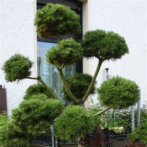 Kleine Bäume Vorgarten by Baum Und Rosenschule Zumpe