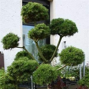 Kleine Bäume Für Den Vorgarten : kugelb ume f r den vorgarten bild kugel trompetenbaum seite familienheim strukturgebende str ~ Sanjose-hotels-ca.com Haus und Dekorationen