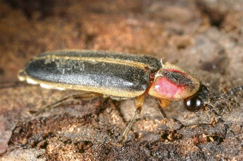 A List Of Different Types Of Beetles That'll Blow You Away